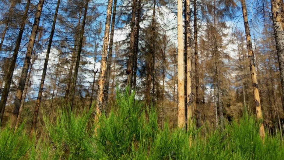 Wald geht uns alle an!